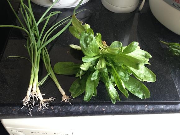 hagyma és saláta