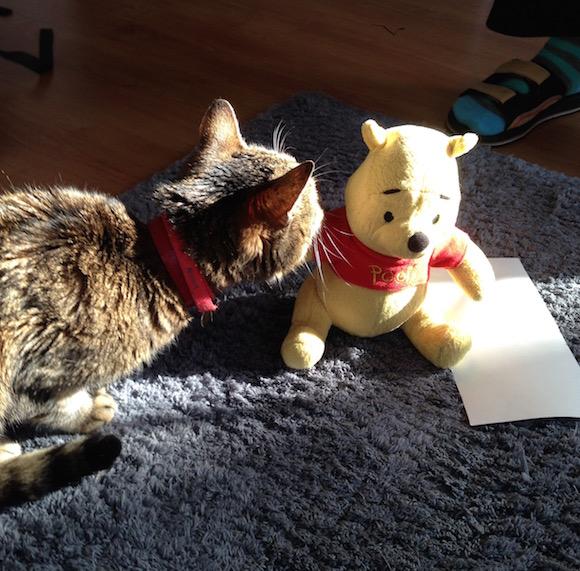 Maci a macskával