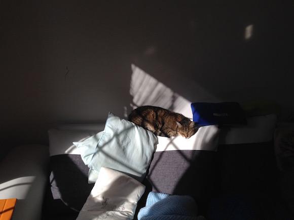 Macska napozik