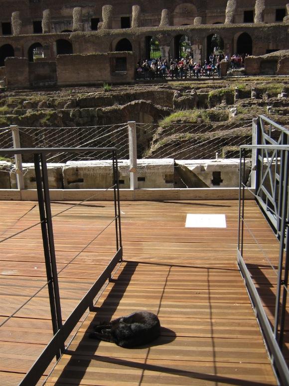 Colosseum macskával