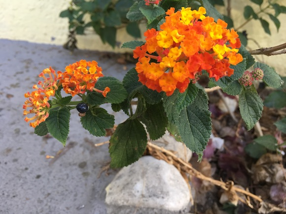Kisvirág