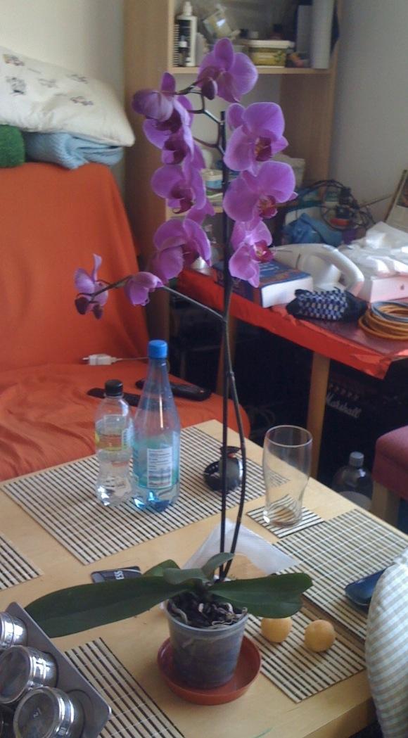 Új orchidea